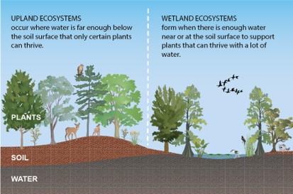 Upland Ecosystems