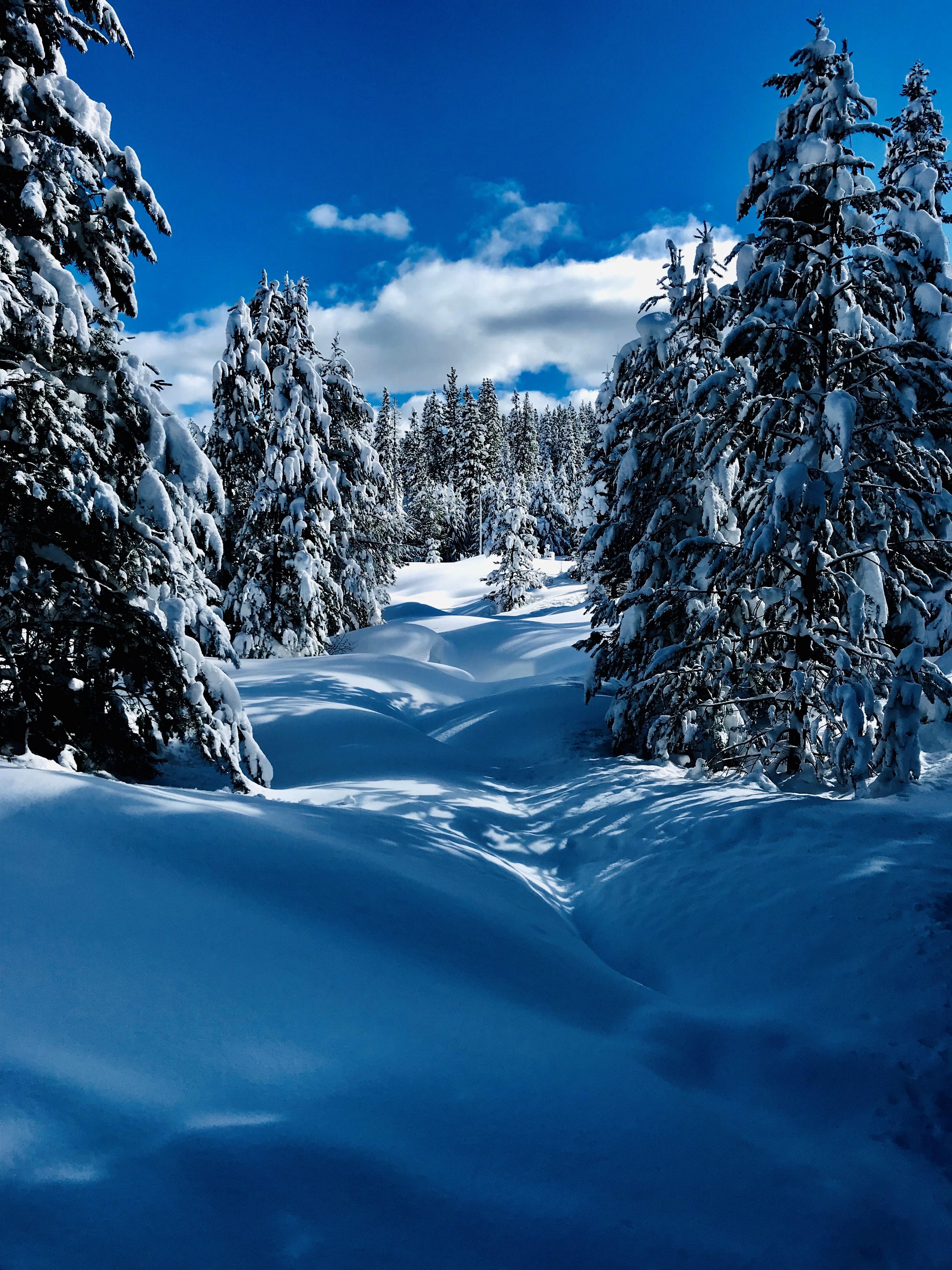Truckee 2019 snowfield - Copy